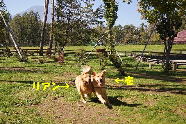 1_20121029101533.jpg