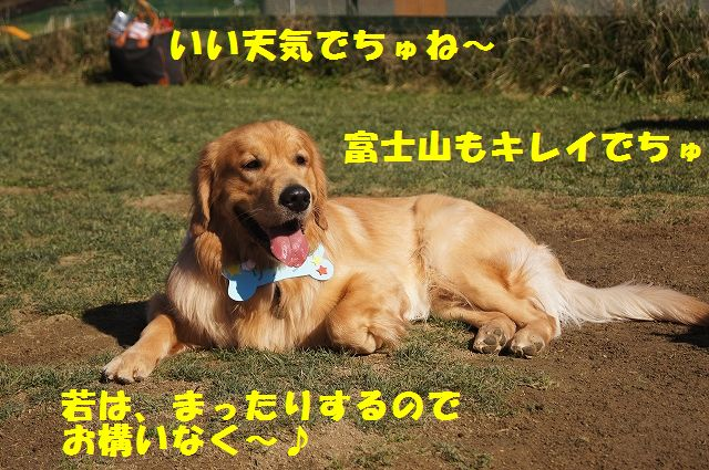 1_20121121031932.jpg