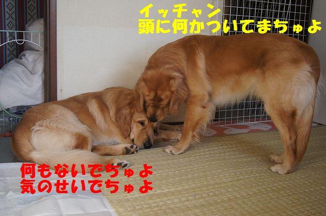 1_20121225115614.jpg
