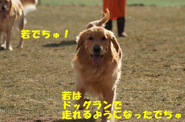 1_20121226041109.jpg