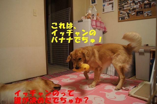 1_20130103172055.jpg