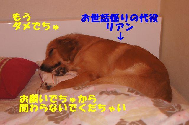 1_20130111210255.jpg