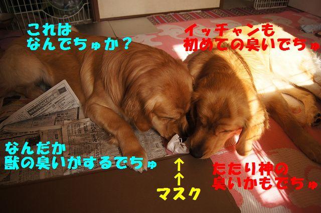 1_20130119070433.jpg