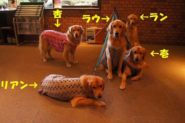21_20121029044651.jpg