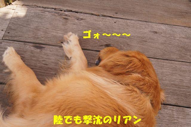 21_20121029101650.jpg