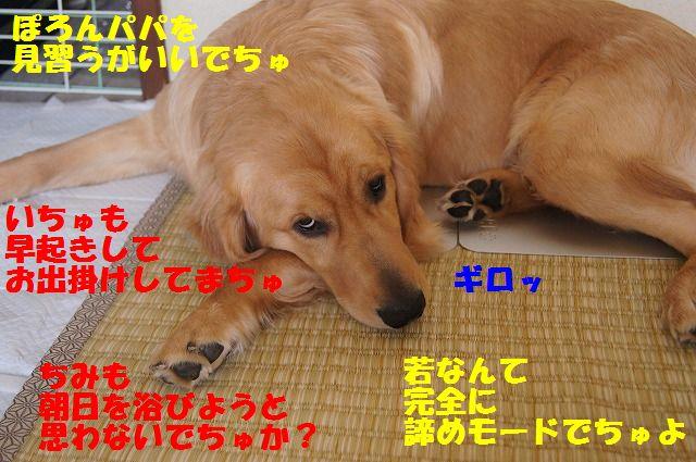 2_20120516194836.jpg