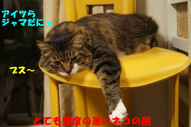 2_20120520202329.jpg