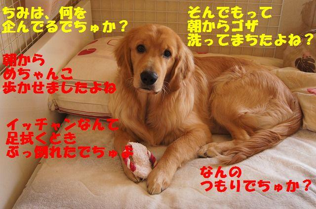 2_20120528213649.jpg