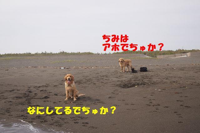 2_20120608011745.jpg