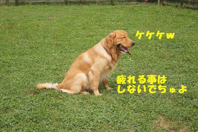 2_20121029044444.jpg