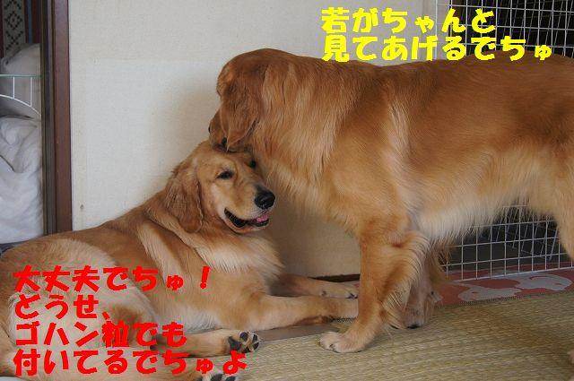 2_20121225115615.jpg