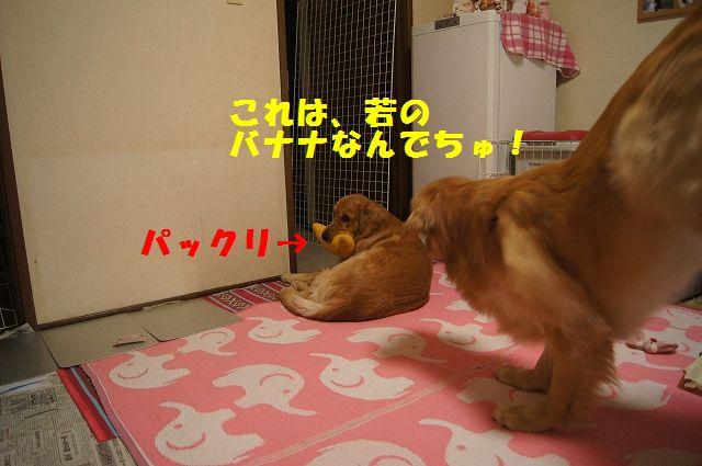 2_20130103172056.jpg