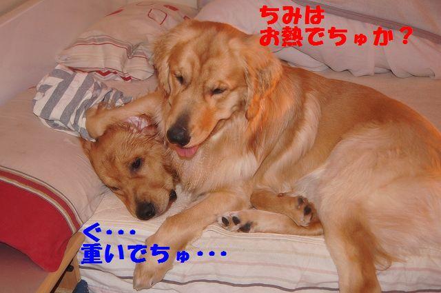 2_20130111210256.jpg