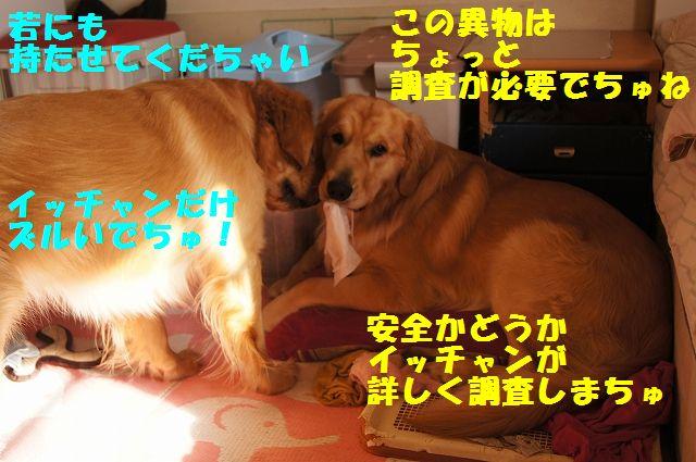 2_20130119070434.jpg