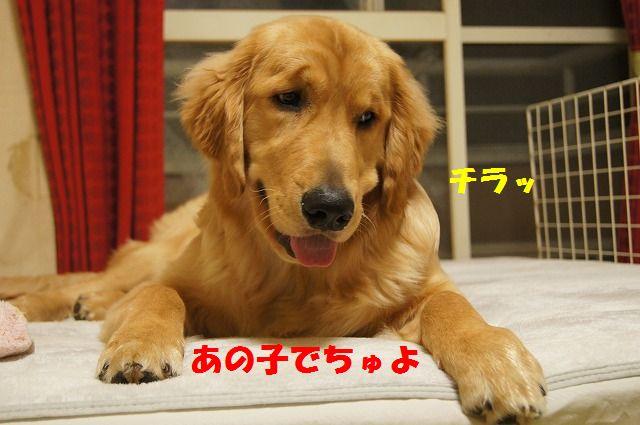 3_20120509214113.jpg