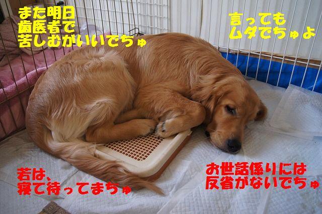 3_20120516194834.jpg
