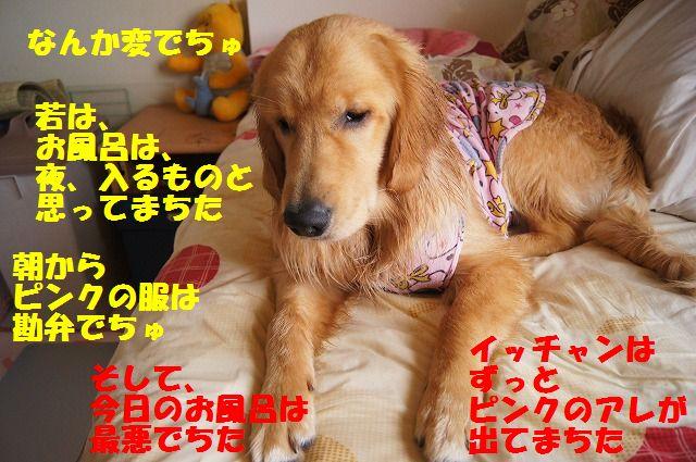 3_20120528213647.jpg