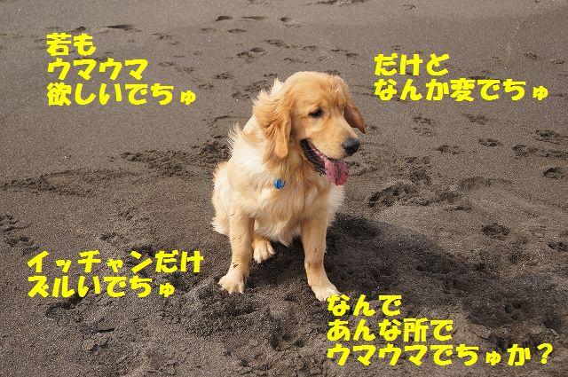 3_20120608003357.jpg