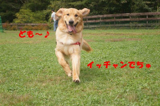 3_20121029044444.jpg