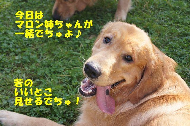 3_20121029104712.jpg