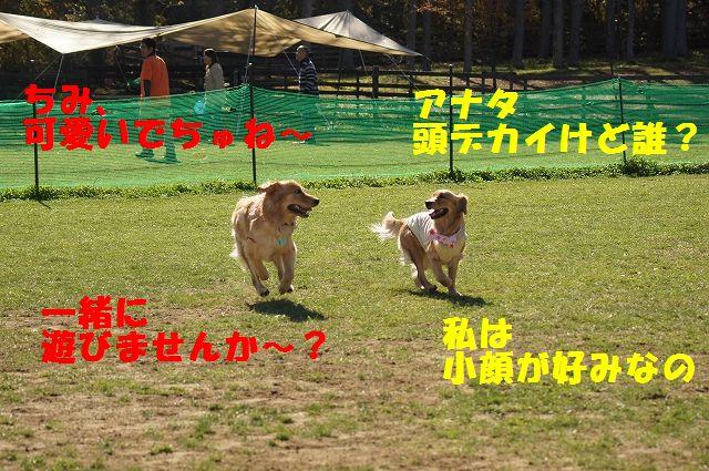 3_20121121031931.jpg