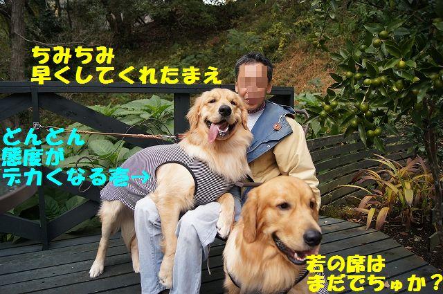 3_20121225024459.jpg