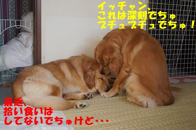 3_20121225115617.jpg