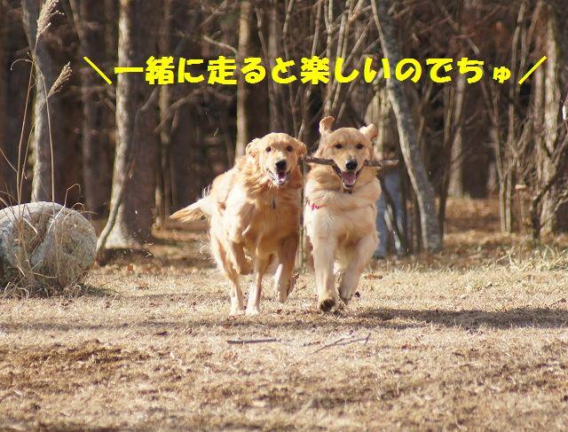 3_20121226041111.jpg