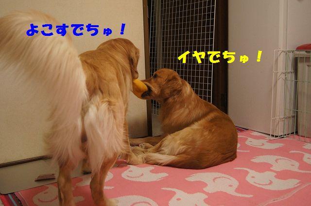 3_20130103172057.jpg