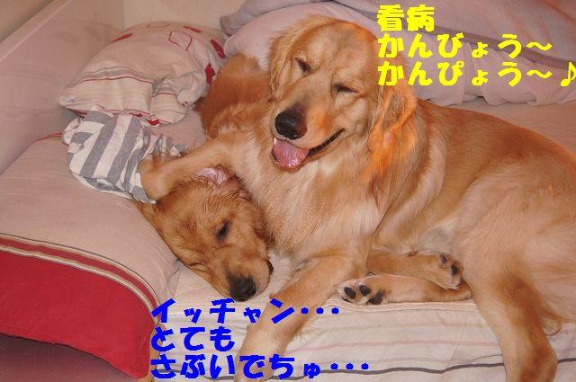 3_20130111210257.jpg