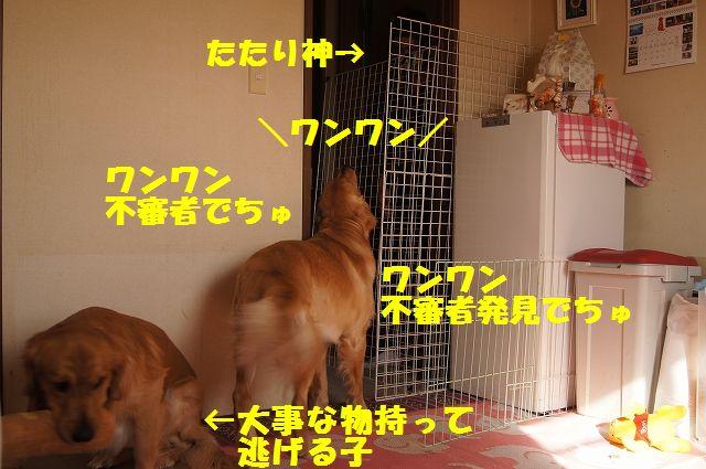 3_20130116171549.jpg