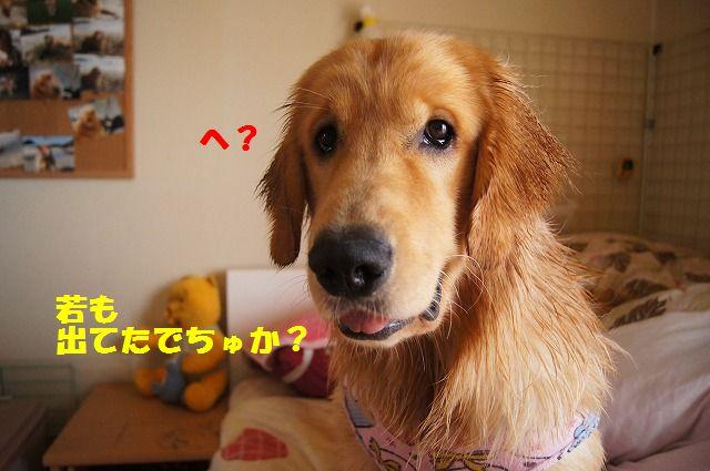 4_20120528213645.jpg
