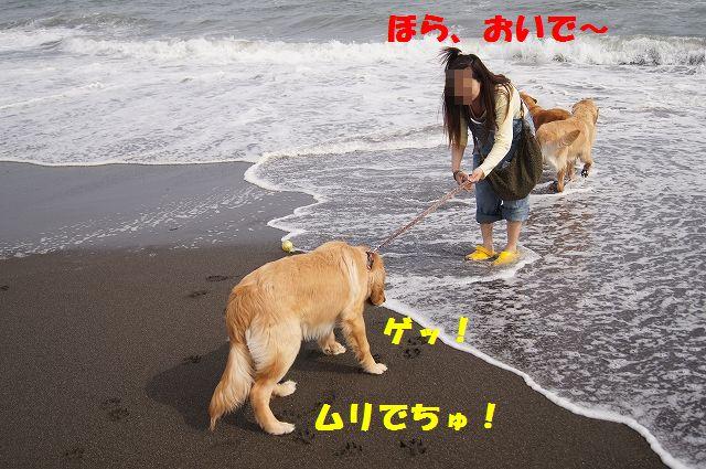 4_20120608003356.jpg