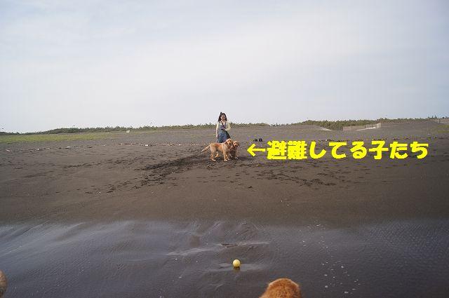 4_20120608011744.jpg