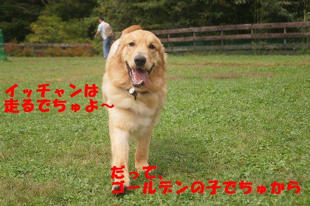 4_20121029044444.jpg