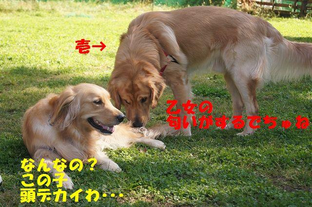 4_20121029101532.jpg