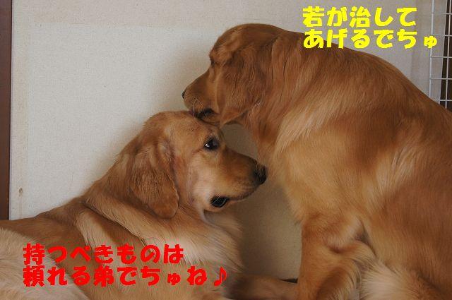 4_20121225115619.jpg