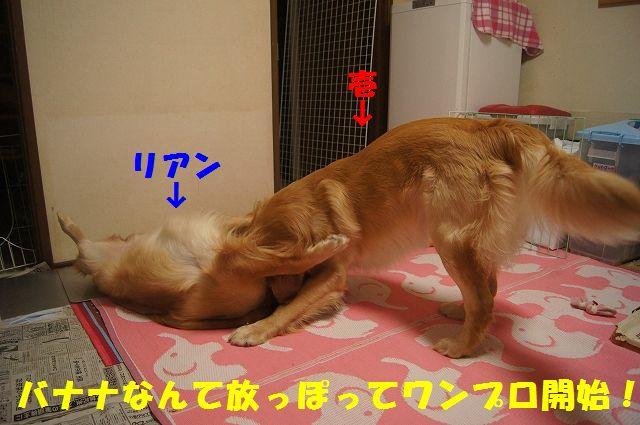 4_20130103172059.jpg