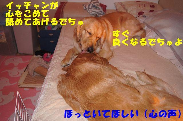 4_20130111210258.jpg