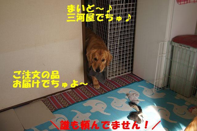 4_20130119070436.jpg