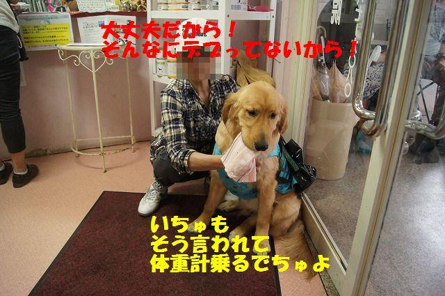5_20120516194833.jpg