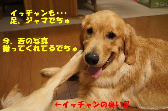 5_20120520202328.jpg