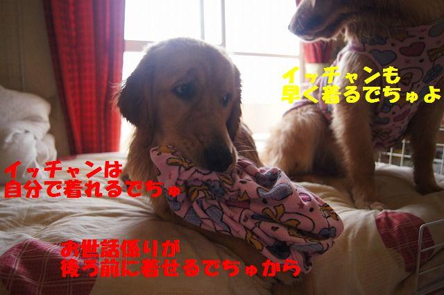 5_20120528213641.jpg