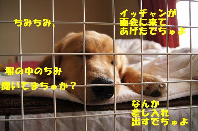5_20120611202306.jpg