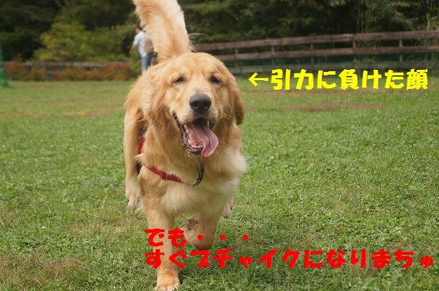 5_20121029044443.jpg