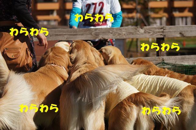 5_20121121031930.jpg