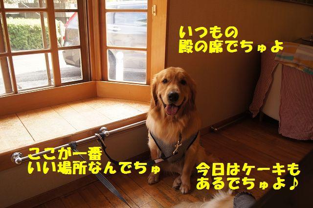 5_20121225024501.jpg