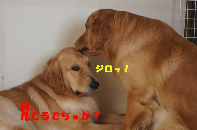 5_20121225115620.jpg