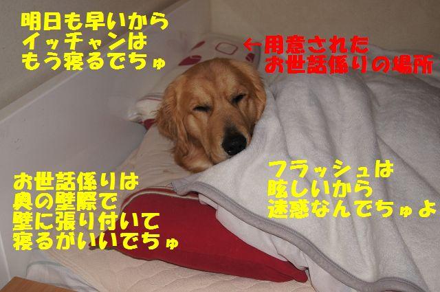 5_20130103172100.jpg