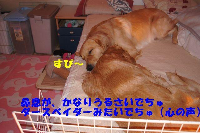 5_20130111210259.jpg